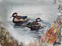 Two Teals
