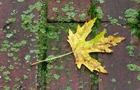 Leaf on Molded Brick