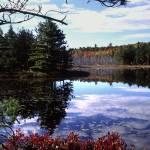 """acadia breakneck ponds pines"" by RichardBaumer"