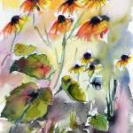 """Flowers Black Eyed Susans Watercolor and Ink"" by GinetteCallaway"