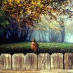 """""""Robin on a Fence_With Fog_5_Paintly"""" by patsphotos"""