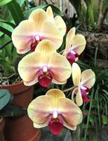 Biltmore Orchids