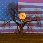 """Patriotic Supermoon Tree"" by lightningman"