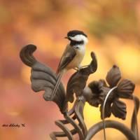 Autumn Chickadee Art Prints & Posters by Steve Shelasky