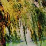 """WEEPING WILLOW TREE II"" by PhotographsByCarolFAustin"