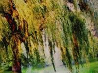 WEEPING WILLOW TREE II