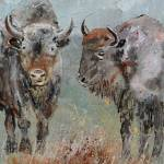 """buffaloes45"" by pol"