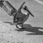 """Seagull ready to fly"" by lightbehaviour"