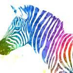 """Zebra   Rainbow Series   Pop Art"" by wcsmack"