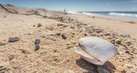 Cape Cod Photography Shell on Herring Cove Beach