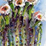 """Arizona State Flower Saguaro Cactus Blossoms"" by GinetteCallaway"