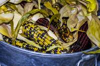 Halloween Corn (1 of 1)