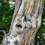 """Old dead tree in color (1 of 1)"" by memoriesoflove"