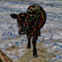 Pop Art Calf