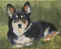 Corgie in Field 10x8