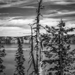 """Withered tree on Crater Lake bw"" by memoriesoflove"