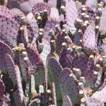 """Purple Cactus Vertical"" by Groecar"