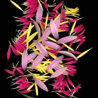 Petal Bouquet Art Prints & Posters by Linda Cavaney