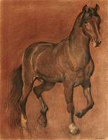 brown-horse-drawing