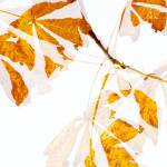 """Autumn Leaves Abstract - Natalie Kinnear Photograp"" by NatalieKinnear"