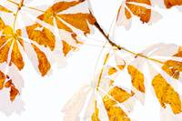 Autumn Leaves Abstract - Natalie Kinnear Photograp