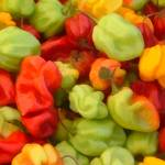 """""""farmers_market_yellow_red_green_peppers_print"""" by Designermite"""
