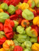 farmers_market_yellow_red_green_peppers_print