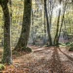 """fageda-jorda-autumn"" by mgarrido"