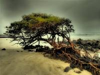Galapagos Tree on Beach