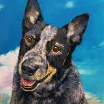 """Blue Heeler"" by creese"