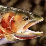 """""""cutthroat trout"""" by k9artgallery"""