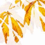 """Autumn Leaves Abstract 2"" by NatalieKinnear"