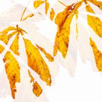 Autumn Leaves Abstract 2 Art Prints & Posters by Natalie Kinnear