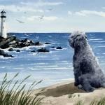 """bouvier des flandres beach 1"" by k9artgallery"