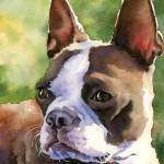 """""""boston terrier brown and white 2"""" by k9artgallery"""
