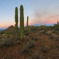 Saguaro Dusk Art Prints & Posters by Mike Dawson