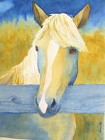 yellow Palomino horse