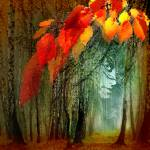 """Autumn Sight"" by zenin"
