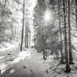 """Winter Sunshine Forest Shades Of Gray"" by lightningman"