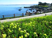Perfect day In Pacific Grove