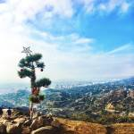 """""""Christmas in Griffith Park"""" by Misskellymcg"""