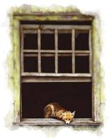 Cute Fox in Abandoned House
