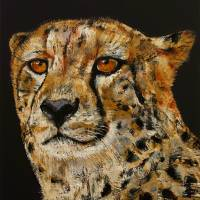 Cheetah Art Prints & Posters by Michael Creese