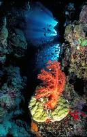 Soft Coral Cave