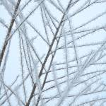 """Frosty Natural Patterns"" by Groecar"
