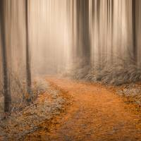 Path Through the Misty Woods Art Prints & Posters by Don Schwartz