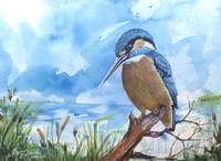 KINGFISHER watercolor original MARCIA BALDWIN 2016