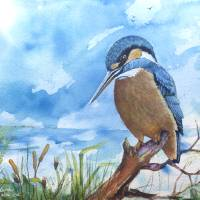 KINGFISHER watercolor original MARCIA BALDWIN 2016 by Marcia Baldwin