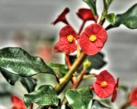 Cute Red Flowers