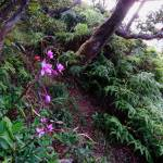 """Hawaiian Orchid Trail"" by joeyartist"